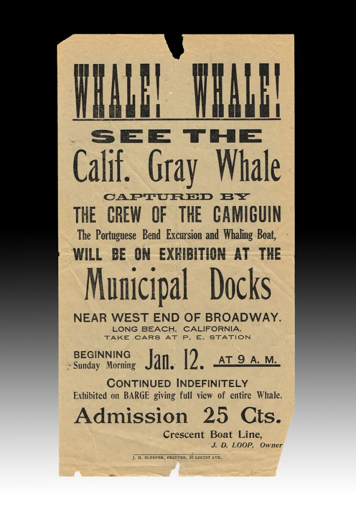 Whale! Whale! See the Calif. Gray Whale Captured by the Crew of the Camiguin (1913 Whale Viewing Handbill). J. D. Loop, John, Davenport.