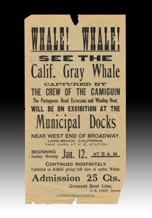 Whale! Whale! See the Calif. Gray Whale Captured by the Crew of the Camiguin (1913 Whale Viewing Handbill). J. Loop, John D., Davenport.