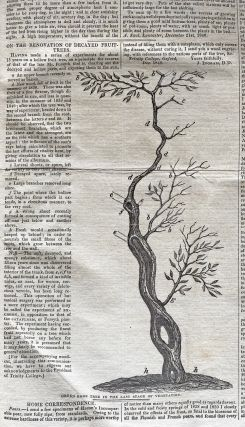 [Botany, Fox Talbot Calotype, Shakespeare Society] The Gardeners' Chronicle : A Stamped Newspaper of Rural Economy and General News. Nos. 1-26 January 2, 1841 - June 26, 1841